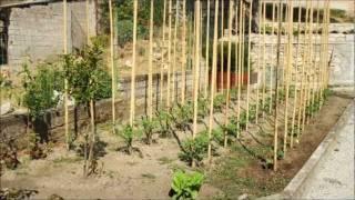 Il pomodoro fuori suolo vea mas videos de regione for Scacchiatura pomodori