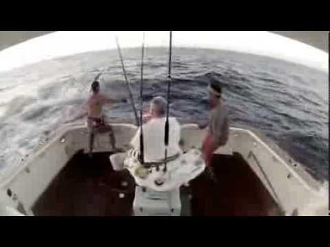 peixe pula para dentro de barco e obriga pescador a saltar no mar