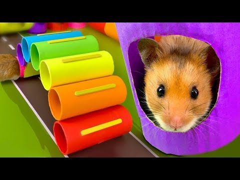 DIY Color Obstacle Course Playground for my little hamster