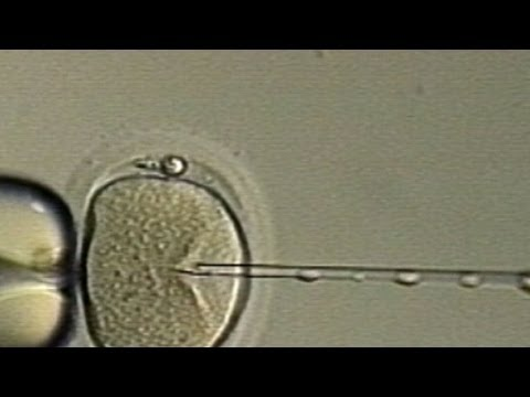 New IVF Treatment Promises Tripled Success Rate
