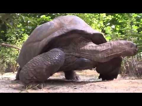 สวนสัตว์บร็องซ์ในสหรัฐฯเปิดให้ประชาชนยลโฉมเต่ายักษ์มหึมา 2 ตัว
