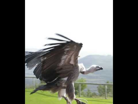 Vulture Facts - Facts About Vultures