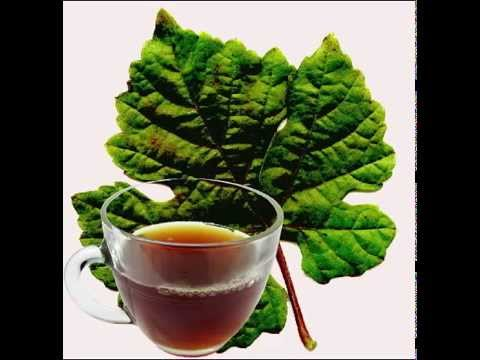 Grape Leaf Tea Health Benefits