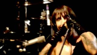 Red Hot Chili Peppers Purple Stain Live At Slane Castle
