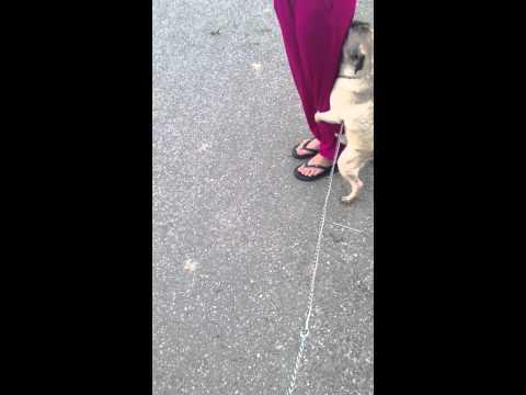 Con chó và em quần hồng