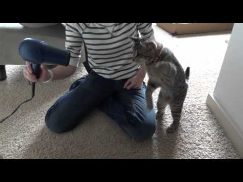 Oskar the Blind Kitten Versus Hair Dryer - Epic Cat Battle
