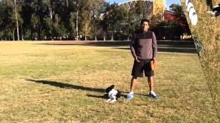 Cómo enseñar a tu perro a Atrapar el Disco en el Aire