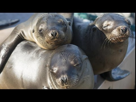 Stranded Sea Lions: Rescuers Race To Save Pups
