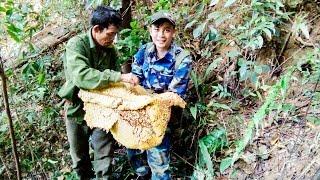 Khám phá quá trình khai thác hai tổ ong rừng khổng lồ