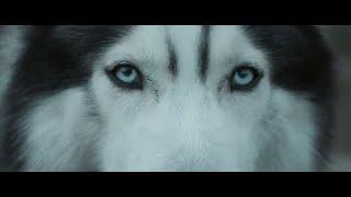 Hardwell feat. Jonathan Mendelsohn - Echo (Official Music Video)