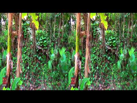 3D Video Exotic Tropical Plants Hawaii Nature Scene - 3D Video Everyday N°183