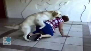 [crazy dog and grandma] Video