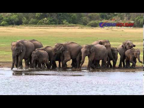 Wildlife Tours in India, Wildlife of India, India Wildlife Tours, Wildlife Tour Packages