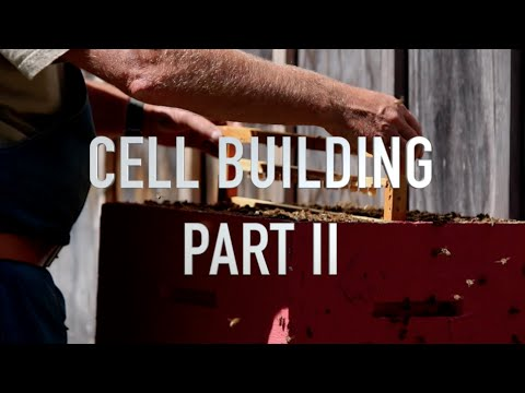 Cell Building Part II