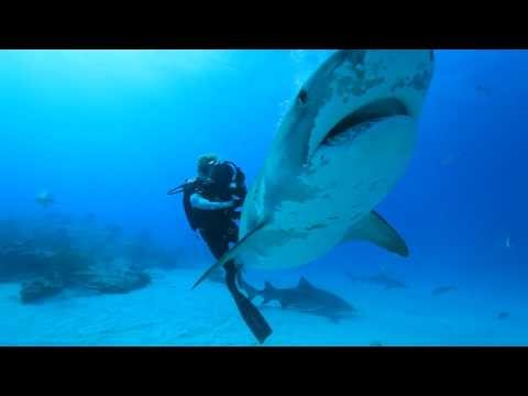 Ocean Ramsey dives with Sharks for Conservation. Water Inspired Music: