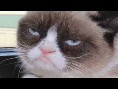 Grumpy Cat goes from meme to the big screen, The world's grumpiest cat lands a movie deal. CNN's Jeanne Moos reports her feline frown is destined for the big screen. For more CNN videos, visit our site ...