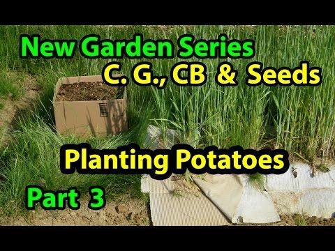 Coffee Grounds, Cardboard & Seeds - No Till Vegetables Gardening Series for Beginners 101. Pt 3