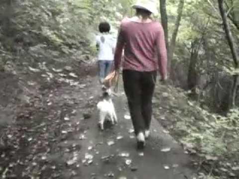 脳梗塞 片麻痺 発症3年9ヵ月 整地・不整地の下り坂の歩行動画