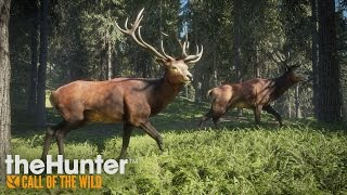 theHunter: Call of the Wild - Gameplay Trailer