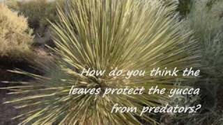 Desert Plant Adaptations.wmv