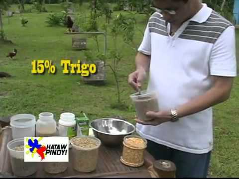 HATAW PINOY   Dr  Teddy Tanchanco feed regimen 21 days keep -EyL1srWjteQ