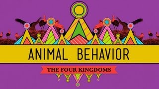CrashCourse: Animal Behavior