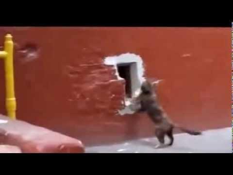 Vãi Mèo