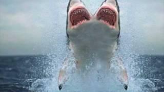 TWO HEADED SHARK!!