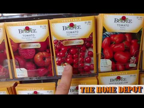 Best Places to Buy Garden Seed !!! Seeds for 20¢ !!! Get Starting Container Growing Vegetables