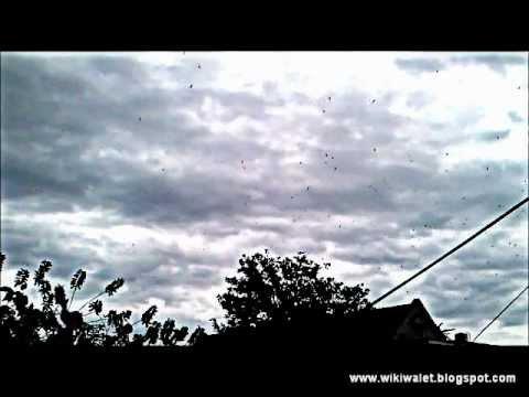 Suara walet : Blackout Effects.wmv