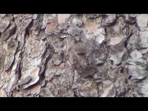 Цикады в Иераполисе. Турция, 2013 - Турция 2013