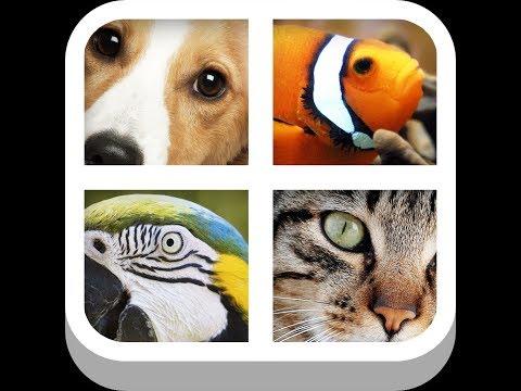 Close Up Animals - Level 7 Answers
