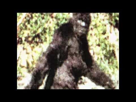 1 of 82 Patterson Gimlin Bigfoot best clips film(2009)