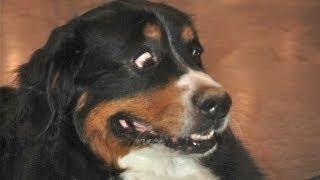 Perros asustados por pedos