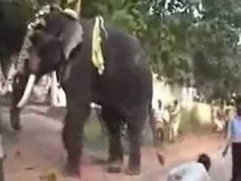 Kerala elephant attack youtube - photo#3
