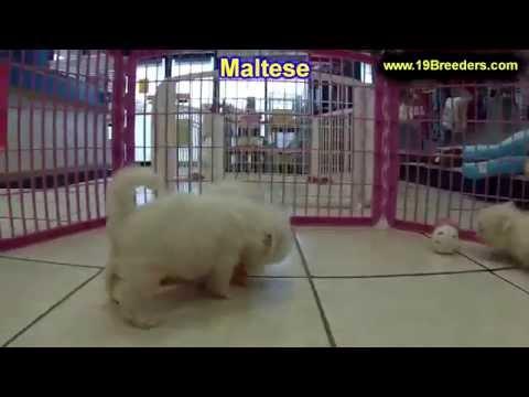 In House Dog Training In Seminole Fl