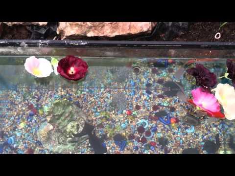 Rescued fish and aquarium: Summer outdoor decorating ideas