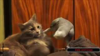 Parrots Annoying Cats Compilation