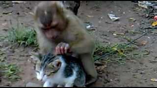 Mono con su gato mascota