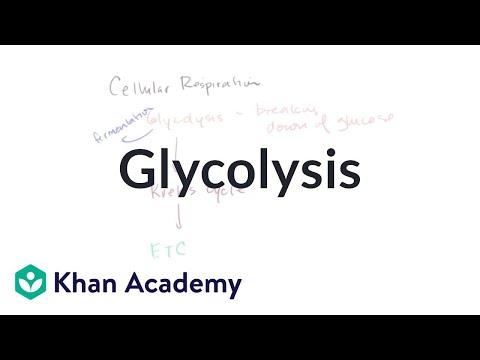 Glycolysis - KA