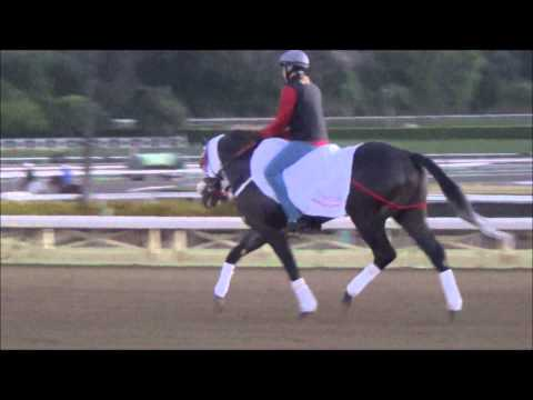 Workouts & Schooling - Oct. 19, 2013 at Santa Anita Park