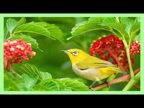 ~ Sound Therapy - Beautiful Birds' Song ~