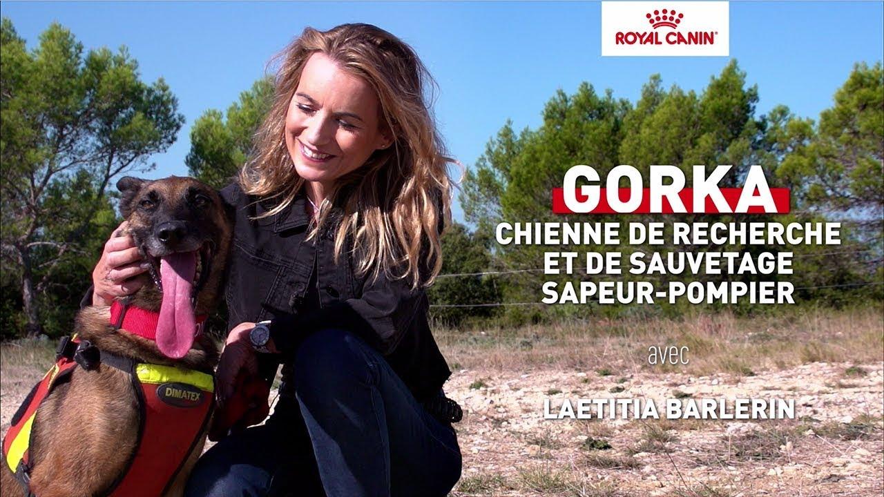 Gorka - chienne de recherche