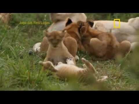 Jogo dos Reis Leões, documentário completo.