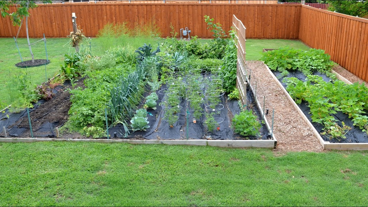 chefs vegetable garden update youtube