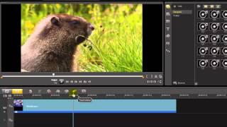 Corel VideoStudio ตอน การจับภาพนิ่งจากวิดีโอ (Take a Snapshot)