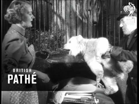 Berlin News - Polar Bear Cub (1953)