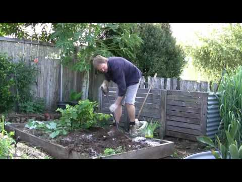 Vegetable Gardening: Growing Onions - How to Grow Onions