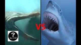 Megalodon vs Predator-X, con nào sẽ thắng #17 || Bạn Có Biết?