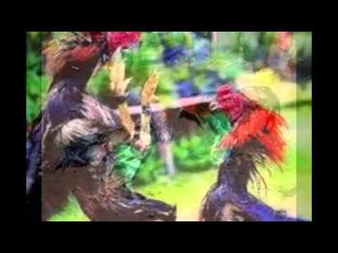 Ayam Bangkok Unggulan